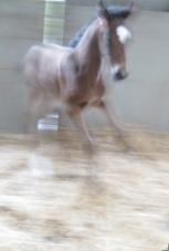 70550-blur