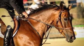 http://horseandstylemag.com/mosiac/zan-chin-kelly-mcknight.html