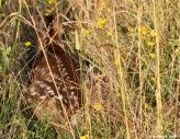 fawn patrol